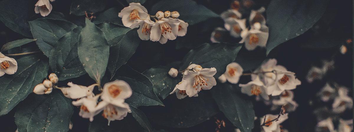aroma-di-gelsomino-pandarancia