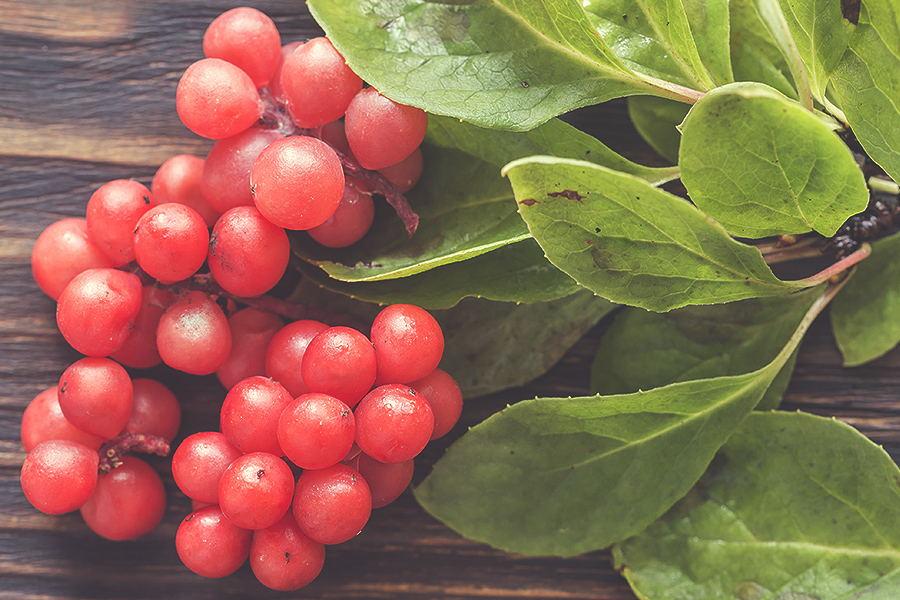 Schisandra: il seme dai cinque aromi e le sue virtù
